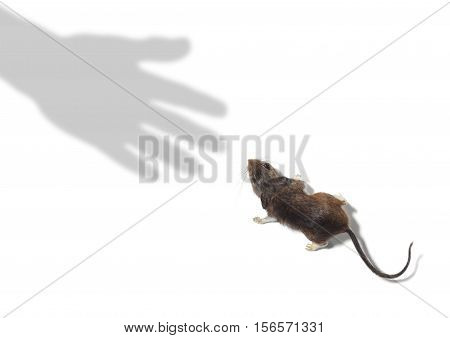 Shadow of Hand Reaching for a Mouse