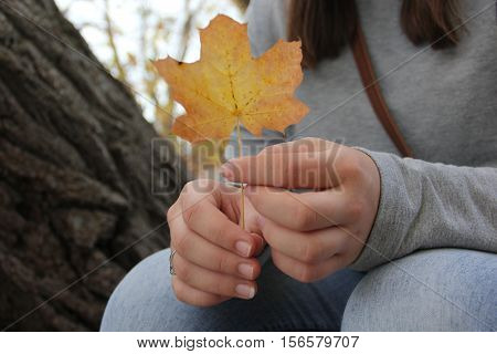 A young woman holds a maple leaf