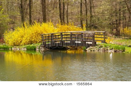 The Buck Garden In New Jersay