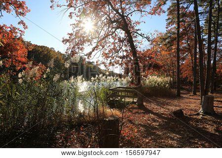 woods landscape during autumn