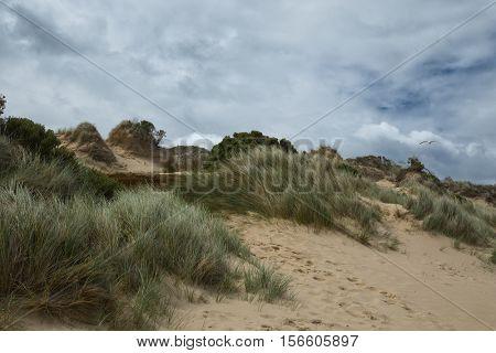 Sand dunes at Cape Woolamai at Philip island in Australia