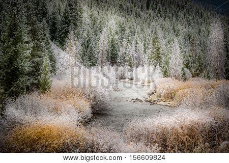 Beginning Of Winter Easley Creek Idaho