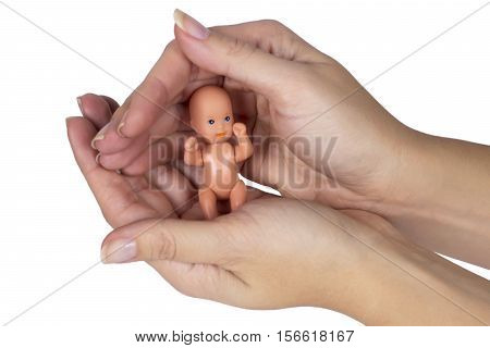 Embryo in woman hands isolated on the white