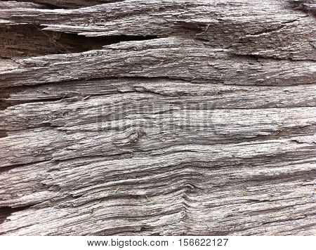 dry peace of wood, ready to put in fireplace
