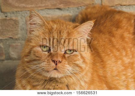 Photo of abandoned red cat with sad eyes