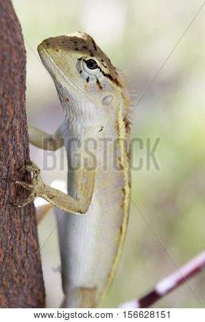 Real lizard resting on a tree with blur background