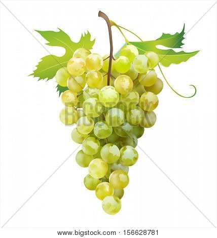 Ripe grape isolated on white. Vector illustration.