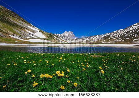 Pietranzoni lake with wild flowers and snow, Campo Imperatore, Abruzzo