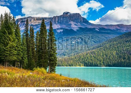 The lake surrounded by a coniferous forest. Magic Emerald Lake in Yoho National Park, Rocky Mountains