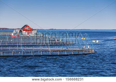 Norwegian Fish Farm, Fjord In Trondheim Region
