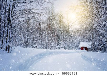 Winter forest with road and golden sunlight, big trees and snow, beautiful season landscape