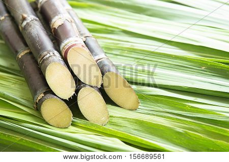 Stalks of sugarcane prepared for producing juice