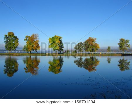 Tree Line in fall follage with Reflection in the water under a clear blue Autumn sky