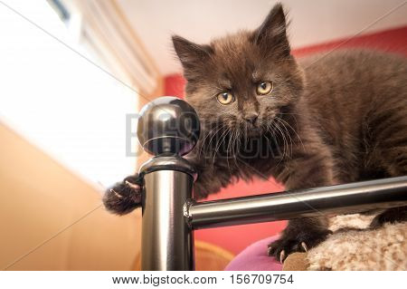 cute black kitten standing on bedroom furniture