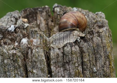 Snails / Snails crawling slowly through the plant