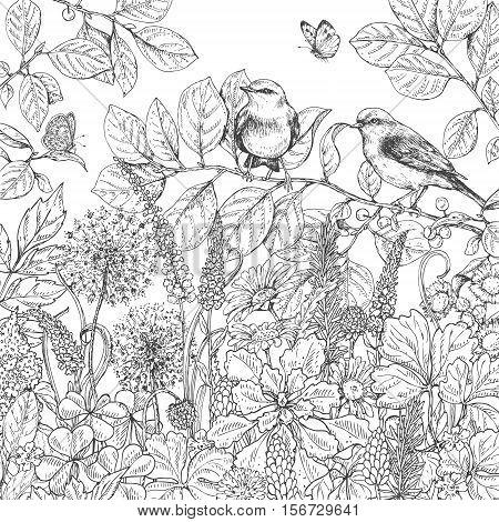 Hand drawn floral elements. Black and white flowers plants butterflies and two sitting songbirds on branch. Monochrome vector sketch.