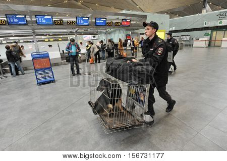 Saint-Petersburg Russia - April 28 2016: Police at the airport Pulkovo are registered service dogs for the flight by plane.