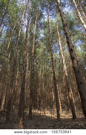 Tree background green environment nature plant trunk