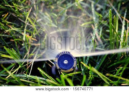 Sprinkler spraying water on grass lawn irrigation