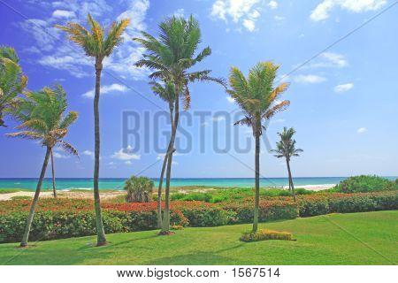 Palm Trees On A Beach