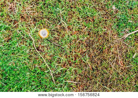 Texture of green and yellow grass with lemon slice