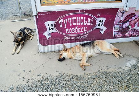 Rivne, Ukraine - May 14, 2013: Two stray homeless dogs sleeping on street by a sausage deli store