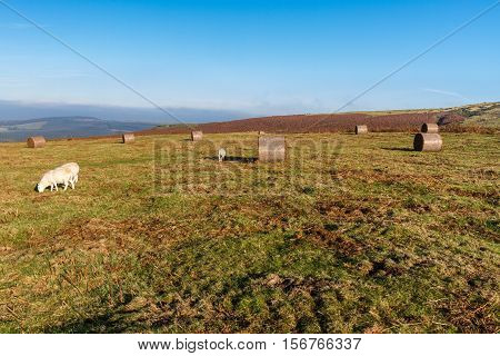Black Mountains View With Sheep
