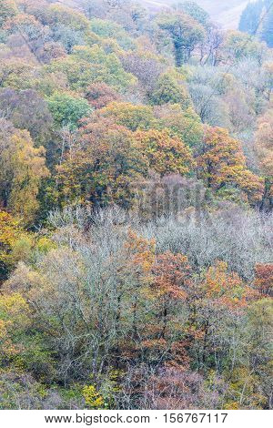 Autumn Fall Scene, Trees, Wales, United Kingdom.