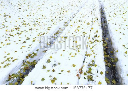 protectors of cars on snow and fallen green leaves, Car tracks, winter road