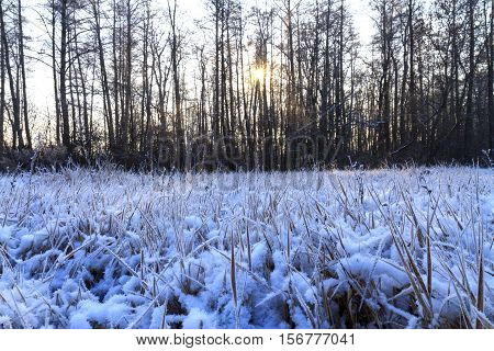 frosty morning in a dark wood, light dry grass, frost on the grass, great snow cover, precipitation
