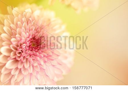One beautiful large flower with a large text area. Colors in a pink and yellow pastel blurred background.