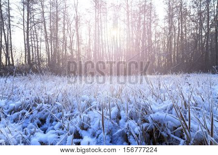 frosty morning in a dark wood with sunny hotspot, light dry grass, frost on the grass, great snow cover, precipitation