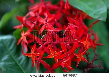 A red group of flowers with a green foliage background.