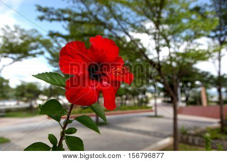 A red flower blooming on a sunny day in Vietnam.