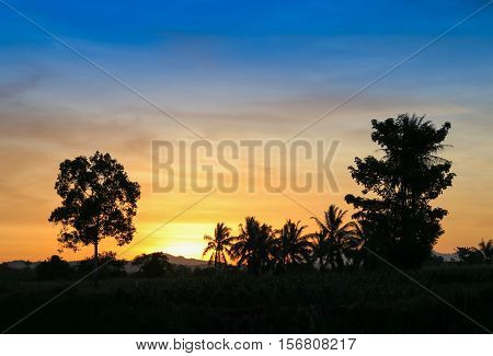 sky in sunset and motion cloud colorful beautiful with silhouette tree in woodland and evening on nature : with copy space for add text.