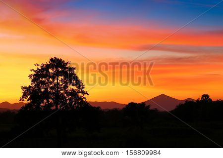 sky in sunset cloud colorful beautiful with silhouette motion tree in woodland and evening on nature : with copy space for add text.