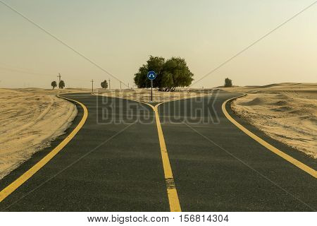 Asphalt bicycle path in the desert the road divide tree in the middle. Sport in the desert. Advertising concept. Place on bodycopy. Road in the desert covered in sand Emirate of Abu Dhabi UAE.