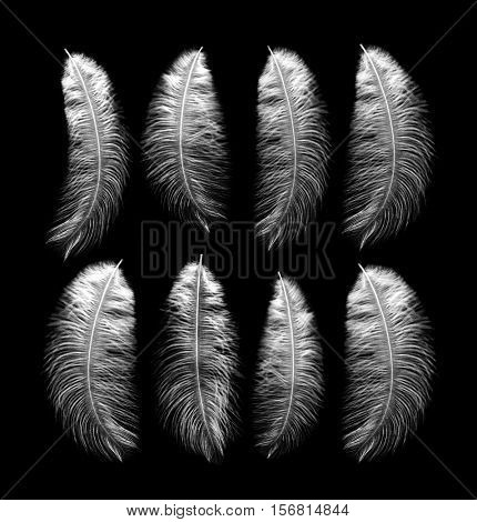 White feathers on a black background