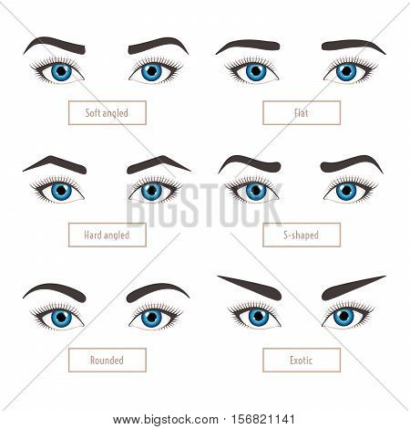 6 basic eyebrow shape types. Classic type and other. Vector illustration eyebrows with eyes - stock vector illustration with captions. Fashion female brow. Trimming.