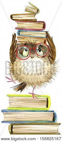 owl. cute owl. watercolor forest bird. school books illustration. cartoon bird