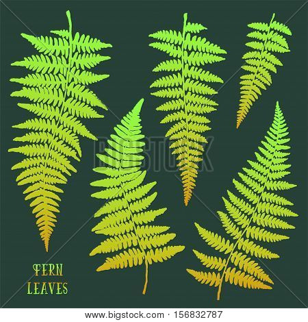 Fresh green hand drawn fern leaves silhouettes isolated on dark background. Vector iilustration