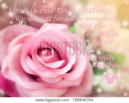 Inspirational quote words by Thomas Merton on vintage background sweet dreamy and soft focus blooming of pink rose
