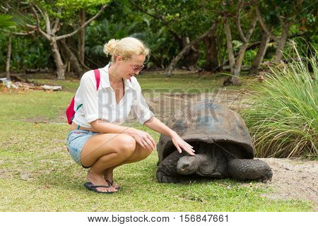 Female tourist woman caressing and admiring big old Aldabra giant tortoises, Aldabrachelys gigantea, in National Marine Park on Curieuse island, close to Praslin on Seychelles.