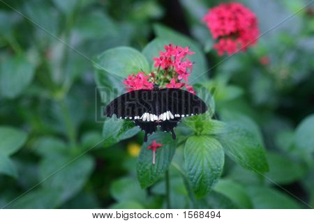 Beautiful Butterfly With Wings Spread In Nature