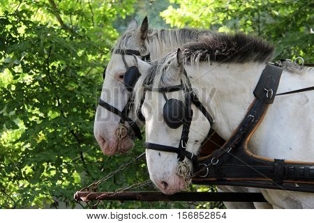 Pets / Horse with blinders on the eyes