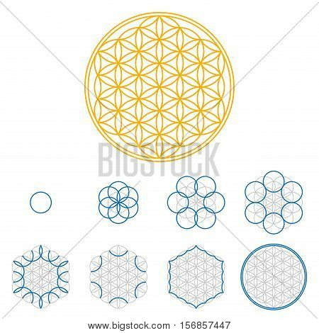 Colored Flower of Life development. An ancient symmetrical symbol, composed of multiple overlapping circles, starting by one single circle, forming a flower like pattern. Sacred geometry illustration.