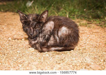 Stray kitten cat sitting on the ground