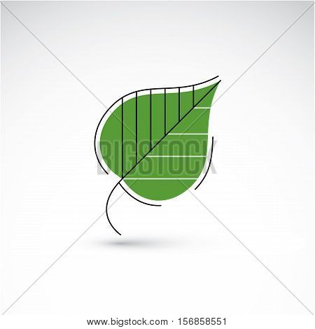 Hand-drawn Illustration Of Simple Birch Tree Leaf Isolated. Green Foliage, Spring Herb. Vector Botan