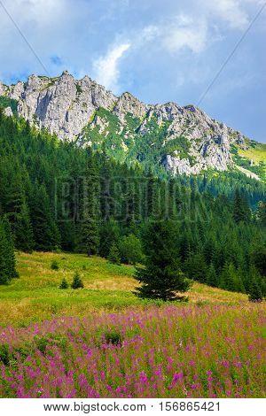 Summer view of the Tatra Mountains Poland.