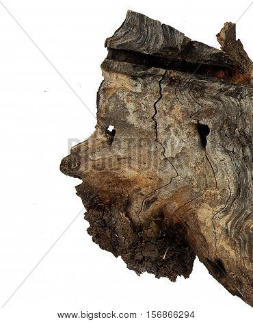 Dilapidated tree stump looks like a human face - the concept of nature as a painter or a sculptor